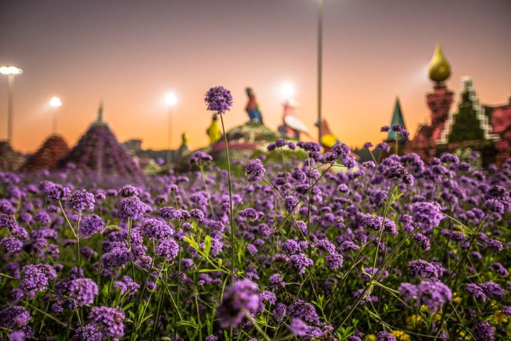 Miracle Garden – floral Disneyland in Dubai